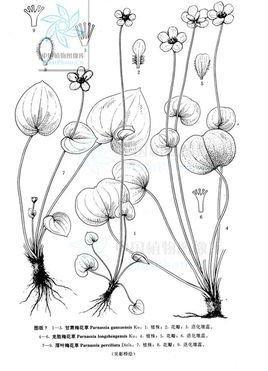 梅花手绘画图片
