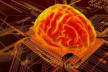 猫的大脑内部结构图
