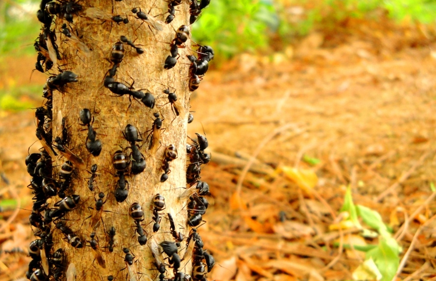 蚂蚁是群居动物,它们居住在一个大的团体中