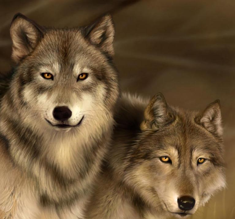 对野生动物保护意识的淡漠