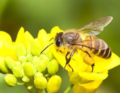 蜜蜂筑巢矢量图
