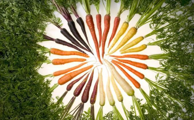 胡萝卜简笔画彩色-瓶子盖风铃手工制作图片