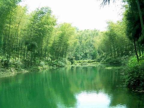 南山竹海景区