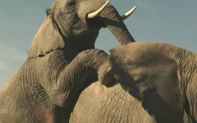 顶楼里的大象爱奇艺