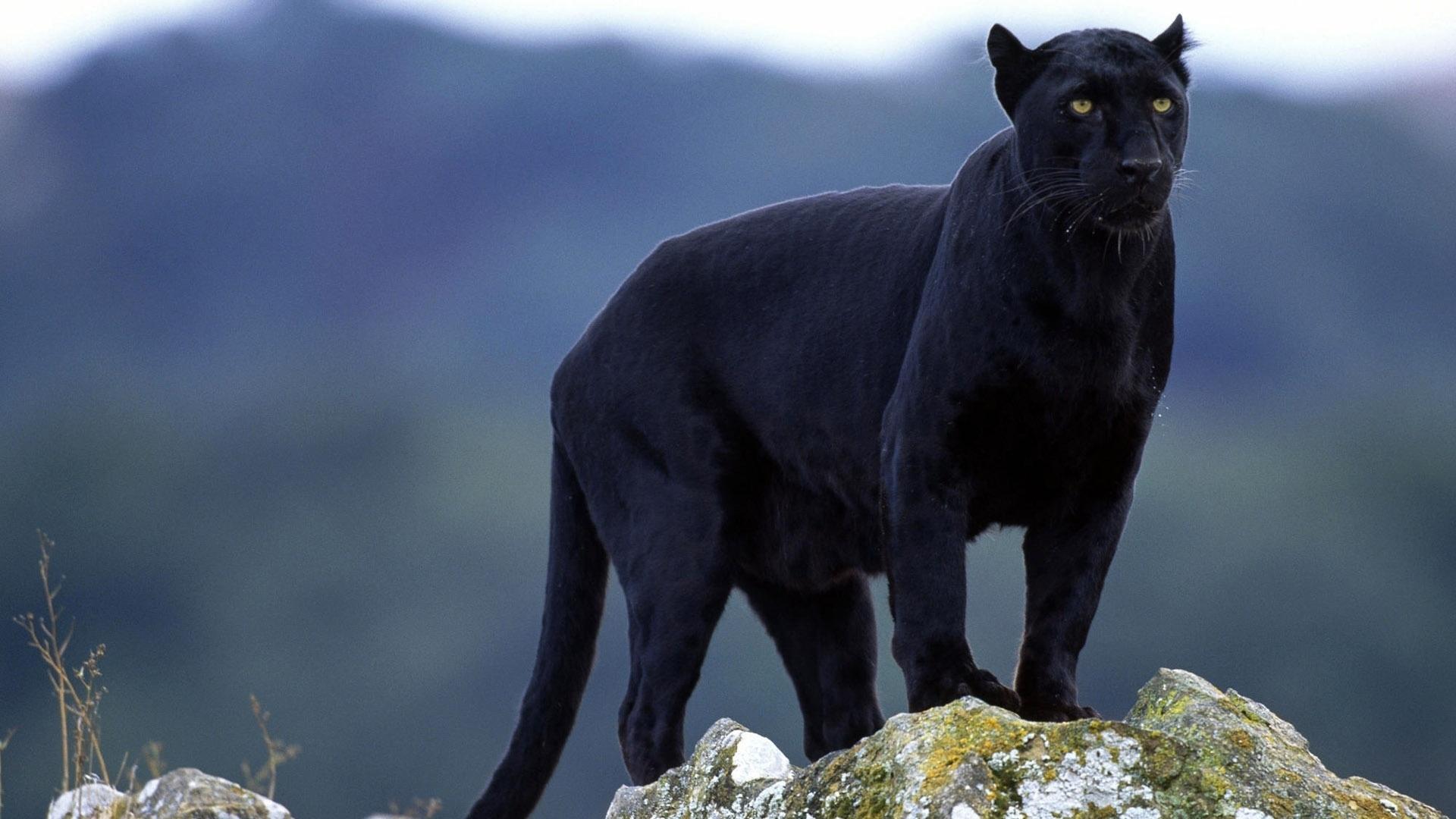 黑豹野生动物保护站