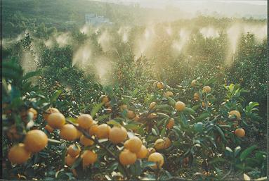 龙泉驿区是省级花果山风景名胜区.