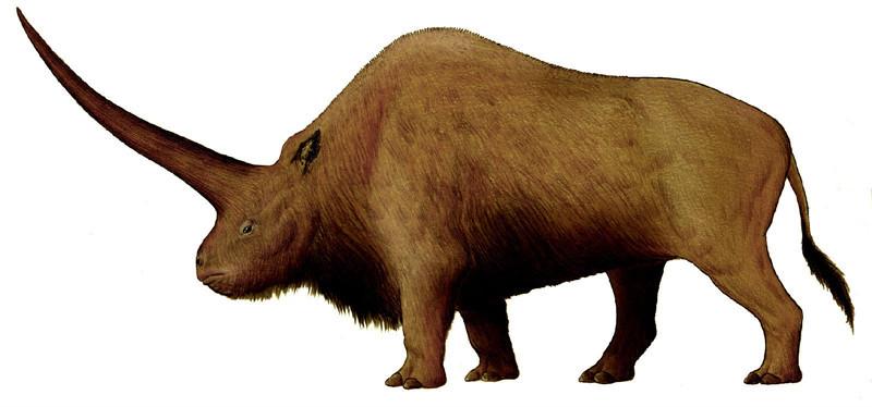披毛犀体型巨大,生有独角